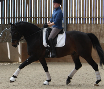 45 min Riding Lesson at Thurleigh Equestrian Centre