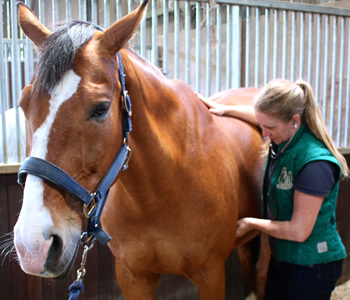 DIPLOMA IN  HORSE HEALTH